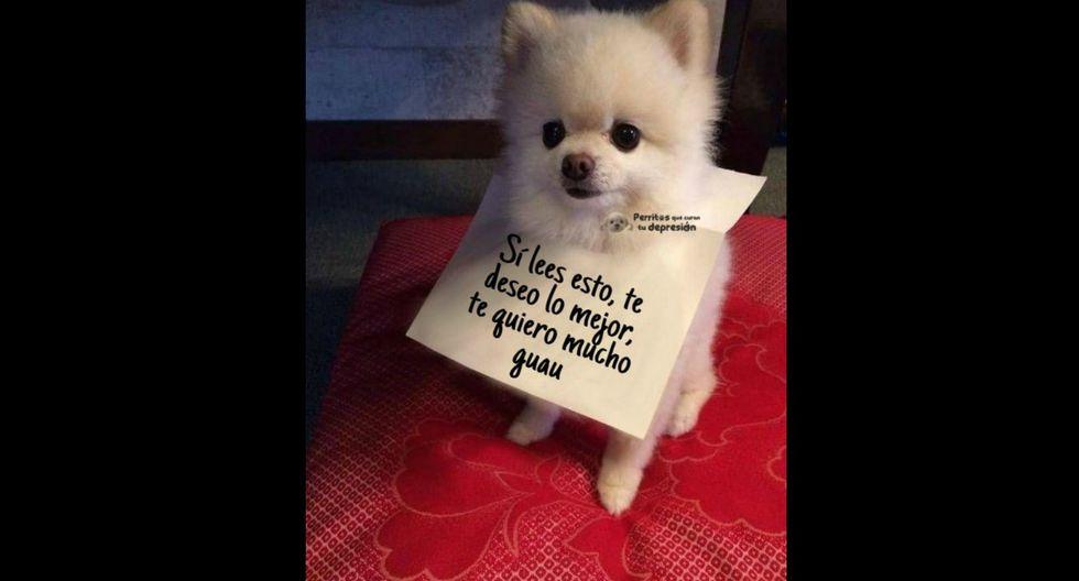 Ríete con los mejores memes sobre el Día Mundial del Perro ...
